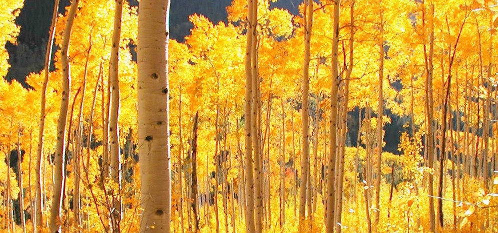 yellow leaves header